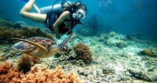 Tư vấn thủ tục cấp giấy chứng nhận đủ điều kiện kinh doanh dịch vụ lặn biển tại Nha Trang Khánh Hòa
