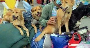 Vụ việc tiêu hủy đàn chó từ vùng dịch về có vi phạm pháp luật không?